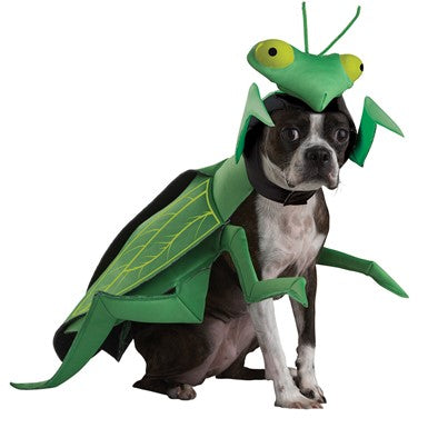 Pet Costume-Praying Mantis