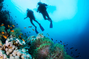 Scuba Diving Tips you should take to heart!