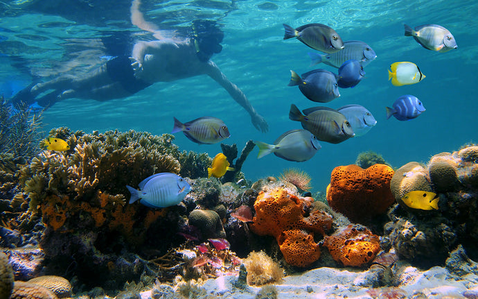 Top 11 Snorkeling Spots in the World