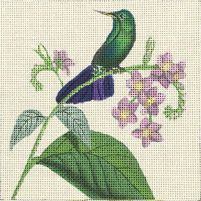 Hummingbirds: Purple Tail