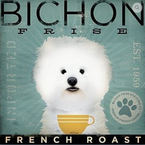 Bichon Frise French Roast