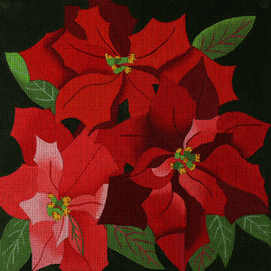 Giant Poinsettias