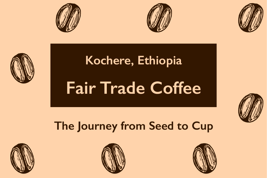 The Journey from Seed to Cup