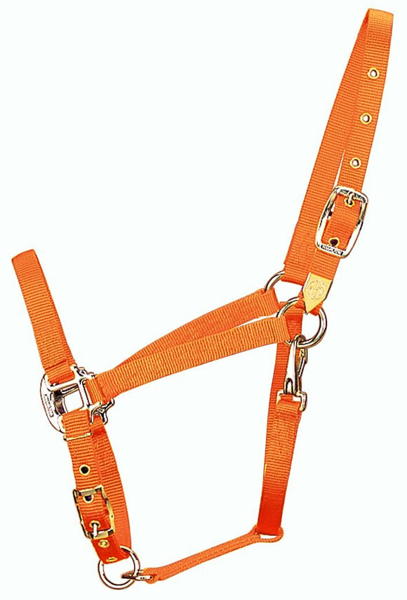 Hamilton 3/4-Inch Nylon Halter - Hamps Saddle & Tack
