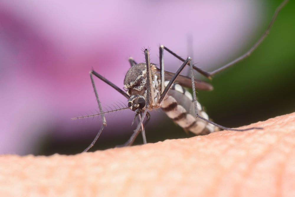 Mosquito Birth Control Being Developed Mosquitonix 174