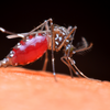First Positive West Nile Virus in Dallas County, TX