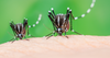 When is Peak Mosquito Season? – Mosquito Control