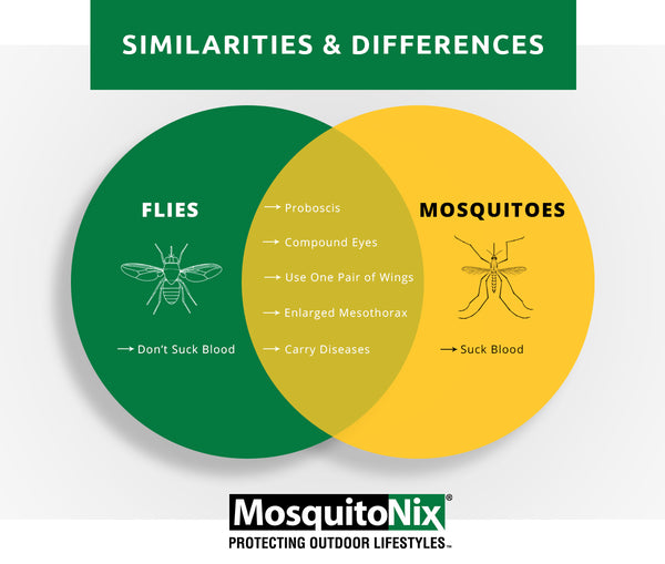learn the difference between mosquitos and flies