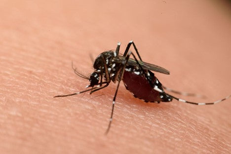 Types of Mosquitoes - MosquitoNix