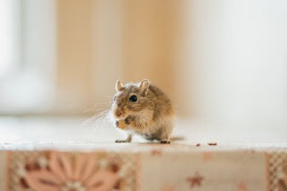 A mouse sat up on a table eating crumbs.