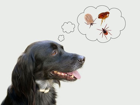 How to Prevent Your Dog from Tick Bites - MosquitoNix