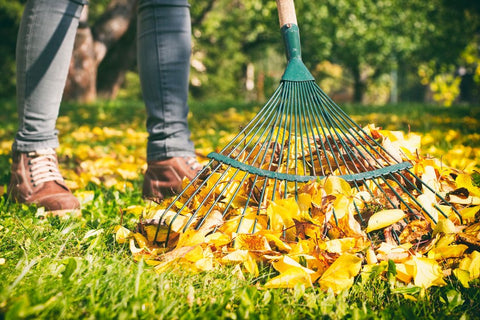 raking leaves for mosquitoes