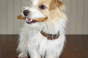 100% of the Proceeds from Our New Pet Treats Helps A Local Humane Society