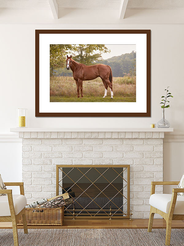 fine art thoroughbred horse collection by Tracey Buyce Photography