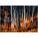 """Forest Fire"" - Order # 458"