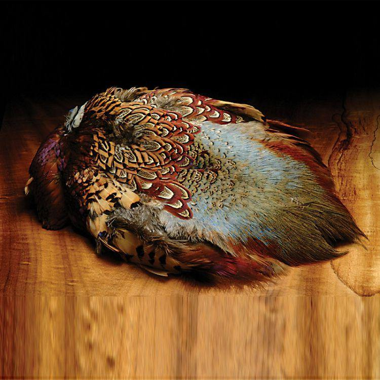 Ringneck Pheasant Skin - Big T Fly Fishing