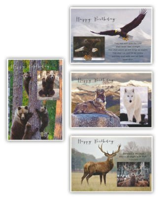 BOXED CARDS - BIRTHDAY - WILD & FREE
