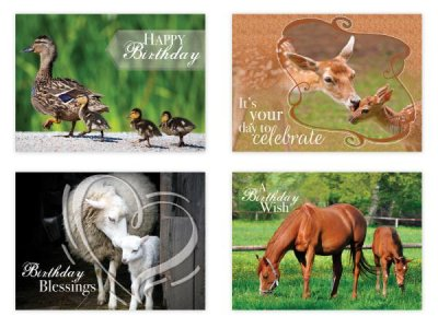 BOXED CARDS - BD - ANIMALS