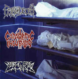 CADAVERIC INCUBATOR / FETAL DECAY / MORTALIZED | 3 Way Split CD
