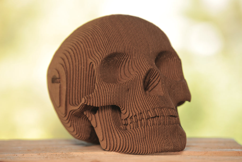 Large Carboard Skull | OK