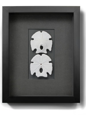 Load image into Gallery viewer, Framed Keyhole Sand Dollars