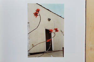 Load image into Gallery viewer, William Eggleston Flowers