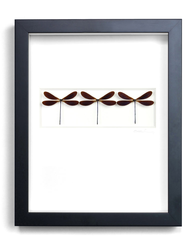 Framed Damselfly Trio