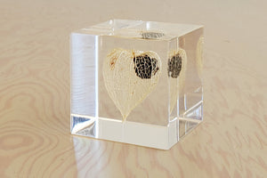 Sola Cube Limited Edition - Chinese Lantern