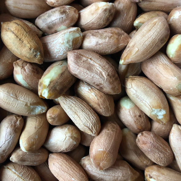 Peanuts 'Virginia Jumbo' (shelled) - (Arachis hypogaea)