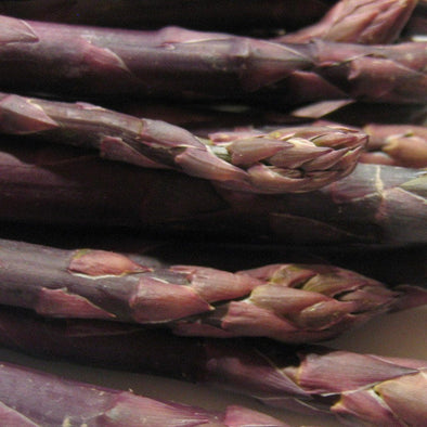 Asparagus Purple - (Asparagus Officinalis) Seeds
