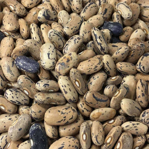 Bean (Bush/dry) Dragons Tongue - (Phaseolus Vulgaris) Seeds