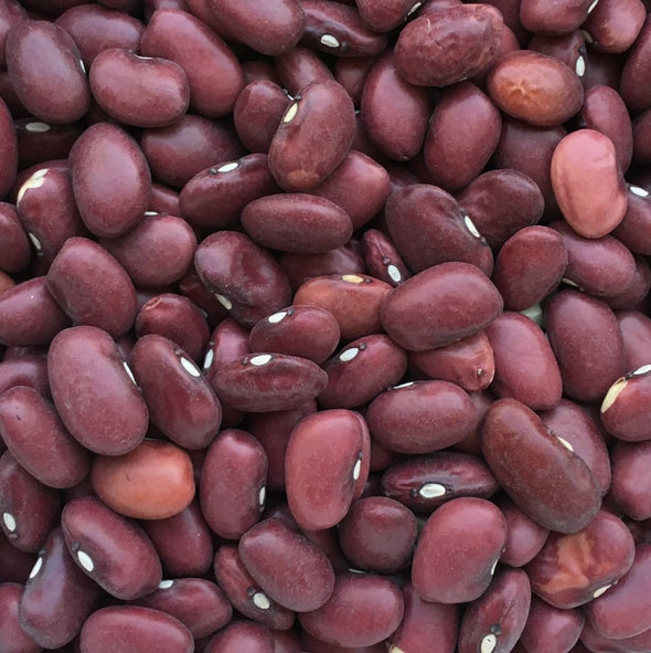 Bean (Bush/dry) Hidatsa Red - (Phaseolus Vulgaris) Seeds