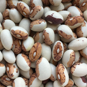 Bean (Bush/dry) Hidatsa Shield - (Phaseolus Vulgaris) Seeds