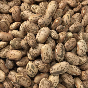 Bean (Bush/dry) Pinto - (Phaseolus Vulgaris) Seeds