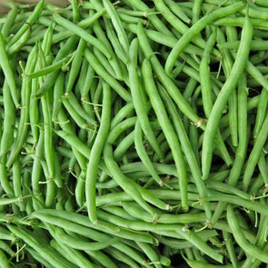 Bean (Bush/snap) Harvester - (Phaseolus Vulgaris) Seeds