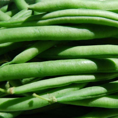 Bean (Bush/snap) Provider - (Phaseolus Vulgaris) Seeds