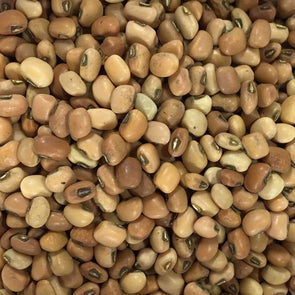 Bean (Cowpea) Iron And Clay - (Vigna Unguiculata) Seeds