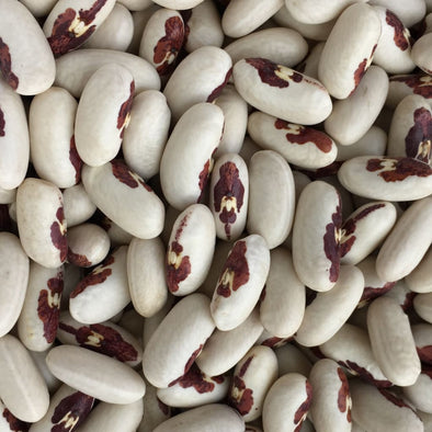 Bean (Dry/bush) Soldier - (Phaseolus Vulgaris) Seeds