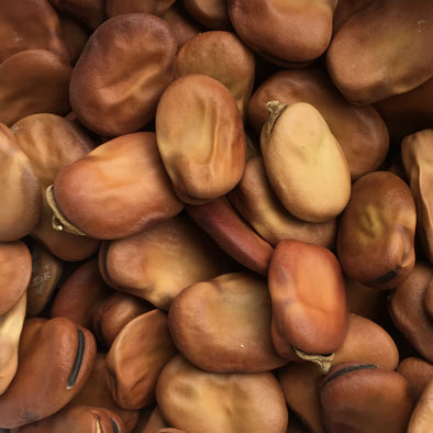 Bean (Fava) Broad Windsor Fava - (Vicia Faba) Seeds
