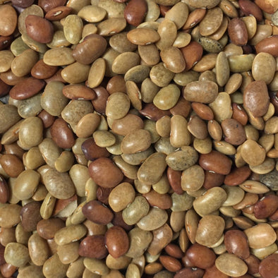 Bean (Kulthi) - (Macrotyloma Uniflorum) Seeds