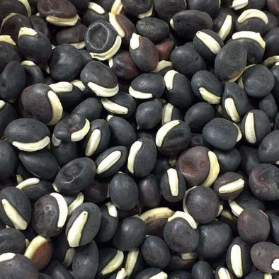 Bean (Lablab/hyacinth) Purple Moon - (Dolichos Lablab) Seeds
