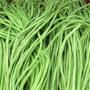 Bean (Pole) Green Noodle - (Vigna Unguiculata) Seeds