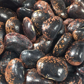 Bean (Pole/dry) Akahana Mame - (Phaseolus Vulgaris) Seeds