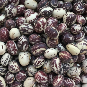 Bean (Pole/dry) Good Mother Stallard - (Phaseolus Vulgaris) Seeds