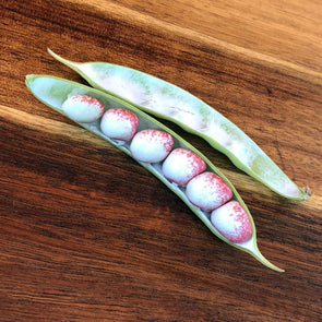 Bean (Pole/dry) Mayflower - (Phaseolus Vulgaris) Seeds
