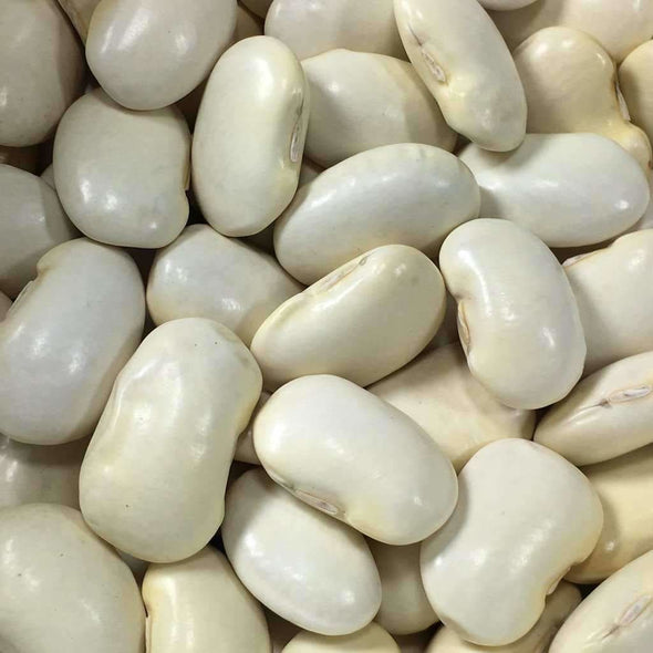 Bean (Pole/dry) Shirohana Mame - (Phaseolus Vulgaris) Seeds