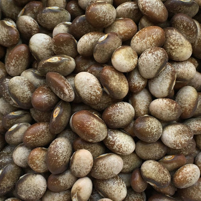 Bean (Pole/dry) Turkey Craw - (Phaseolus Vulgaris) Seeds