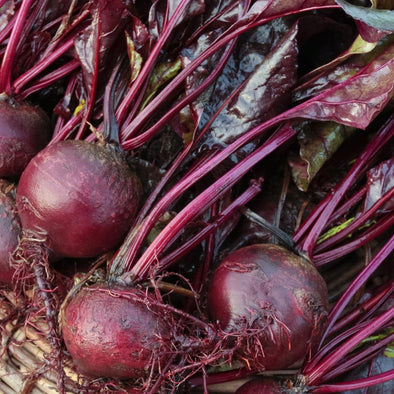 Beet Bulls Blood - (Beta Vulgaris Craca) Seeds