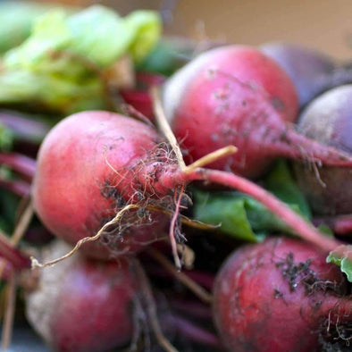 Beet Early Wonder - (Beta Vulgaris Craca) Seeds