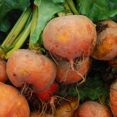 Beet Golden Detriot - (Beta Vulgaris Craca) Seeds